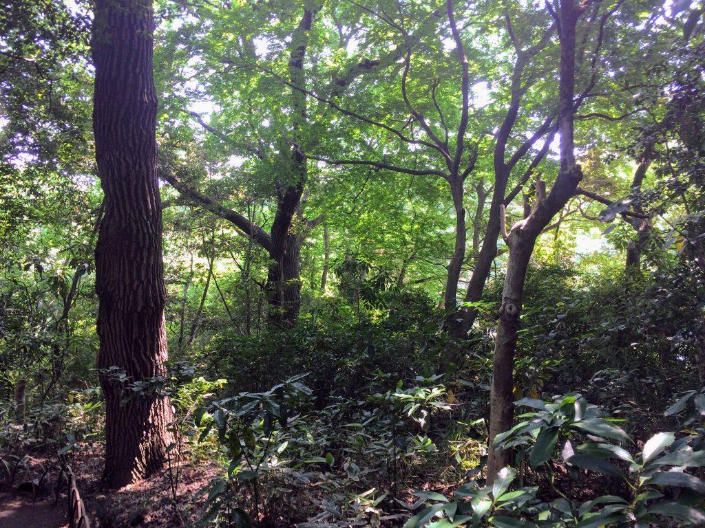明治神宮の森にて100年先、1000年先を思う