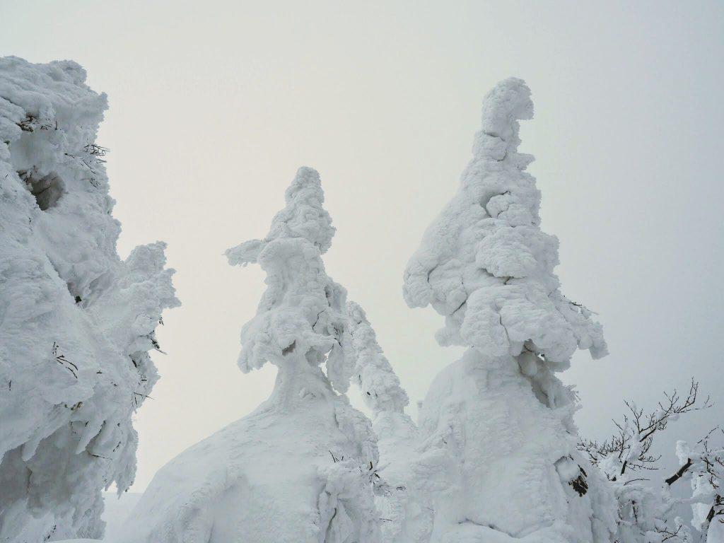 森吉山の樹氷を見に行ってきました