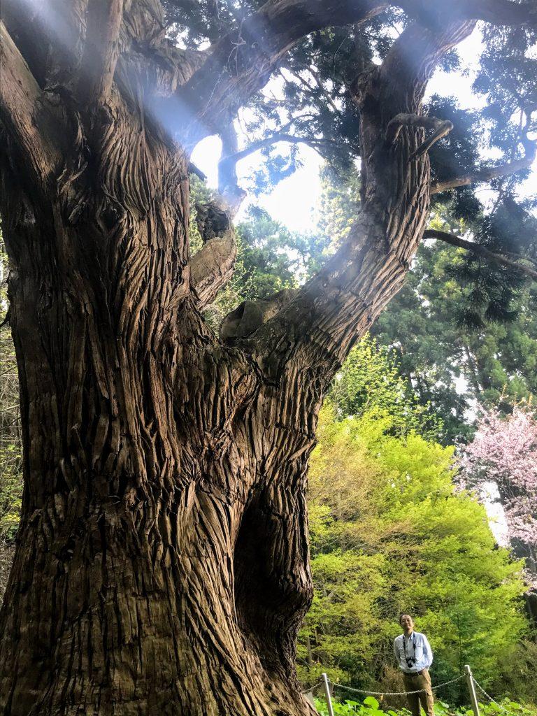 1000年以上も生き続けている奇跡の巨樹に感謝