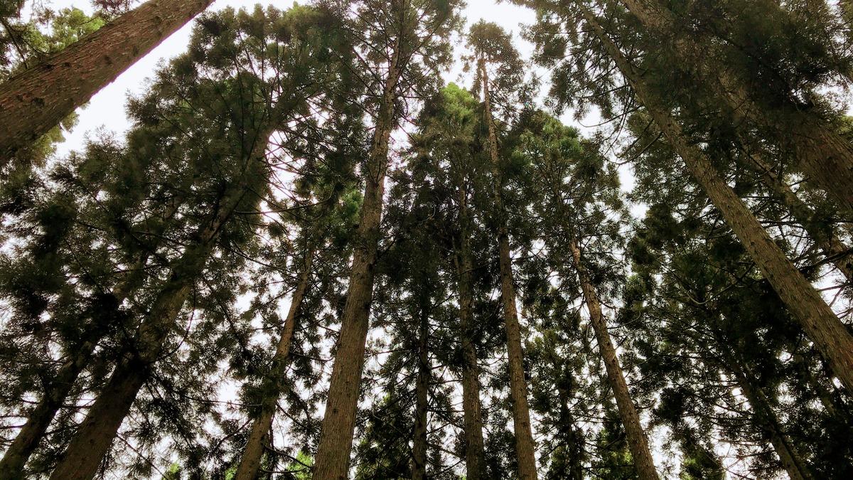 森の中の演奏会-自然の音と楽器演奏の素敵なハーモニー