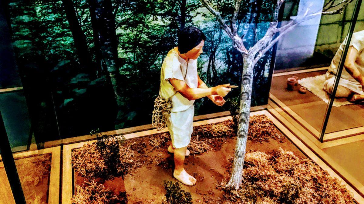 地元の自然公園で縄文と意外な出会い-環境と文化のむら